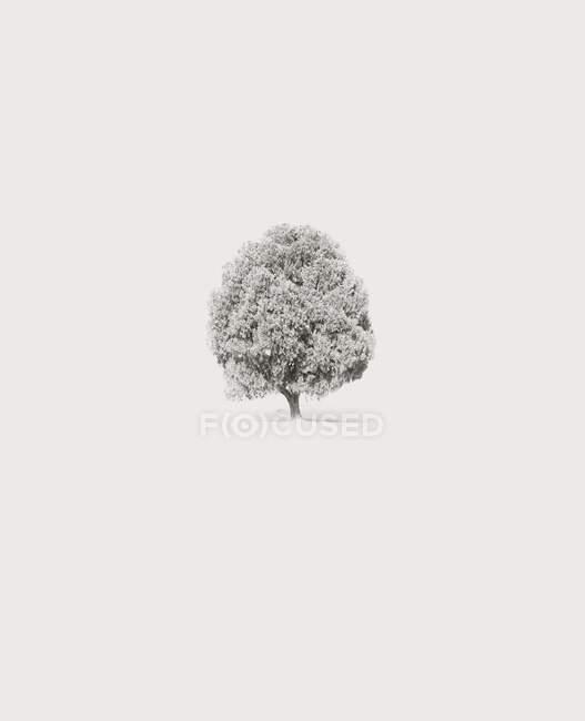 Vista panoramica dell'albero solitario nella neve — Foto stock