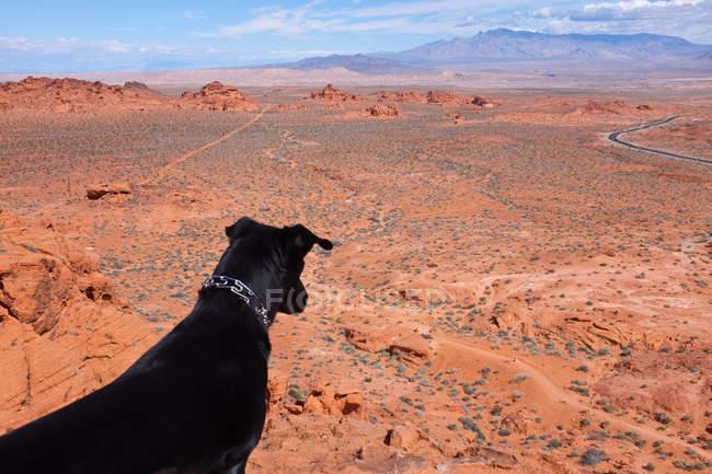 Dog looking at desert landscape, Nevada, America, USA — стоковое фото