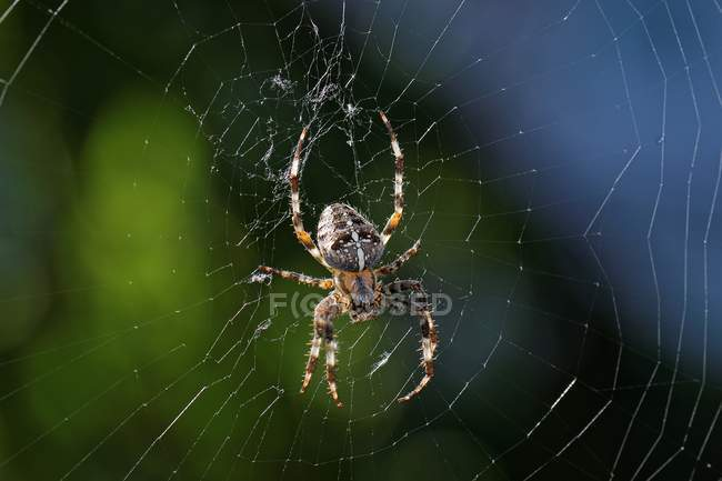 Close-up of a spider in a spider web, selective focus — Photo de stock