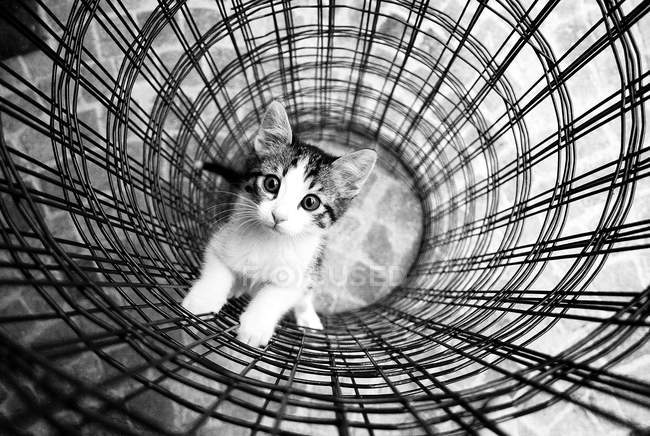Image monochrome de chaton emprisonné dans le maillage en métal — Photo de stock
