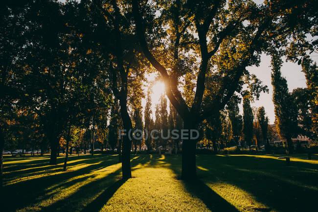 Sunlight streaming through trees in autumn park — Stock Photo