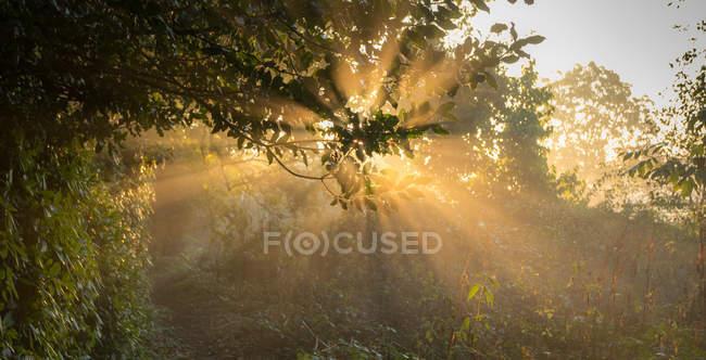 Vista panoramica del raggio di sole attraverso gli alberi, Enschede, Overijssel, Paesi Bassi — Foto stock