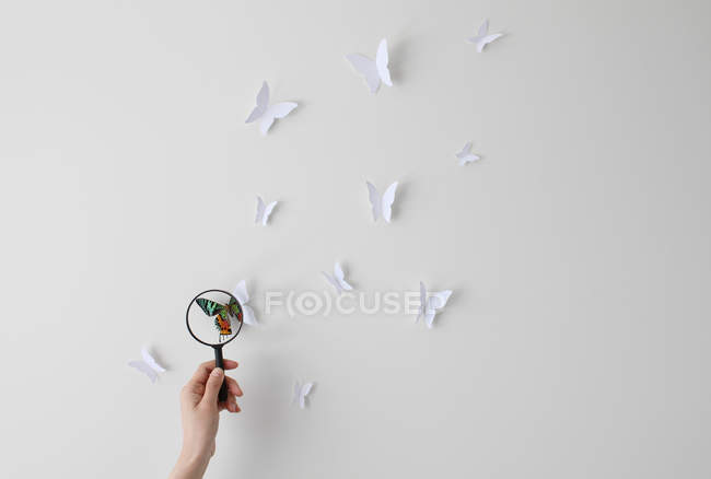 Woman hand holding magnifying glass looking at butterflies — Stock Photo