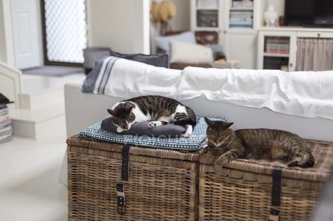 Dois gatos dormindo em cestas de armazenamento na sala de estar — Fotografia de Stock