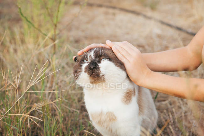 Closeup view of boy stroking a cat — Stock Photo