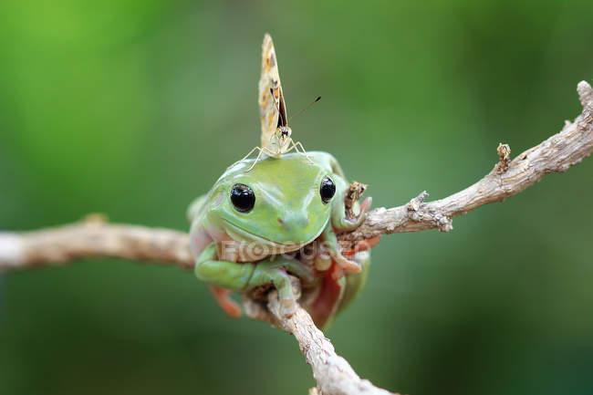 Papillon assis sur une grenouille poubelle, vue rapprochée — Photo de stock