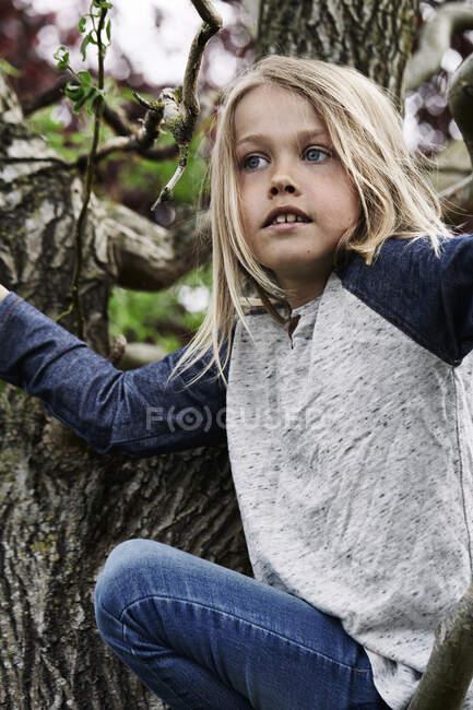 Adorable rubia chico trepando árbol - foto de stock