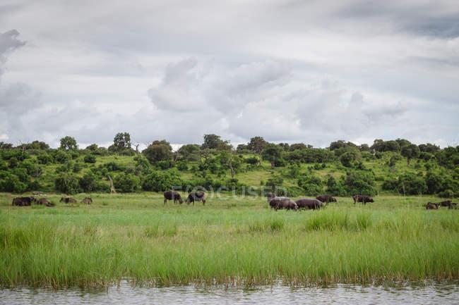 Les éléphants et l'eau dans la savane africaine en kenya — Photo de stock