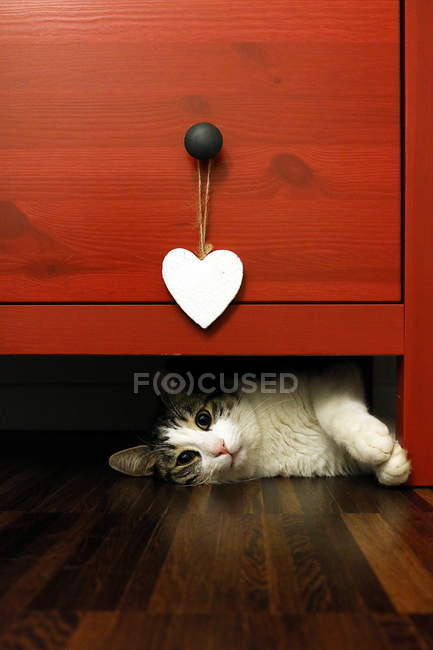 Cat lying under a chest of drawers, closeup view — Stock Photo
