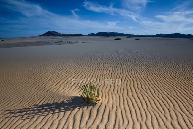 Malerische Aussicht auf Dünen, Corralejo Dunes National Park, Fuerteventura, Spanien — Stockfoto