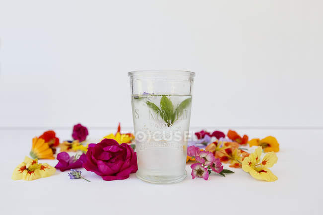 Glass of mint water with edible flowers — Stock Photo