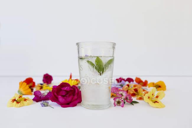 Стакан воды мяты с съедобных цветов — стоковое фото