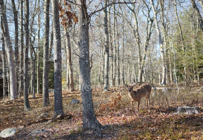 Scenic view of beautiful Deer in the forest — Stock Photo