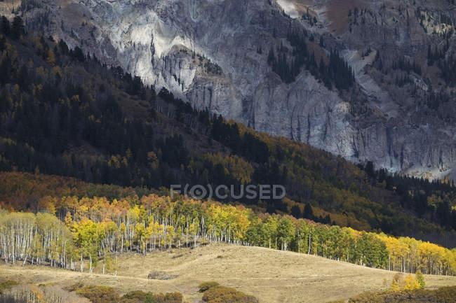 Vue panoramique sur la forêt de peuplier faux-tremble et les montagnes de San Juan, Telluride, Colorado, Amérique, Usa — Photo de stock