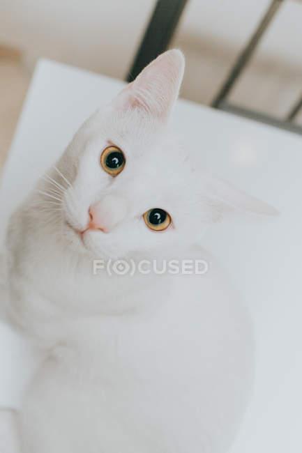 Verticale d'un chat s'asseyant sur une table, vue de plan rapproché — Photo de stock
