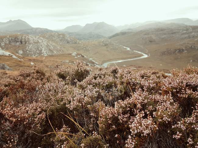 Vue panoramique de Heather sur les hauts plateaux écossais, Gruinard, Écosse, Royaume-Uni — Photo de stock