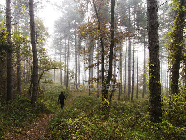 Rear view of man walking through forest, Spain — Stock Photo