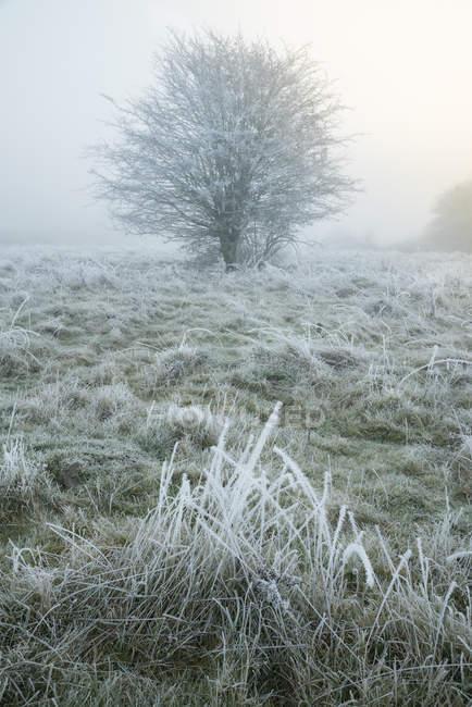 Vista panorámica de invierno árboles, bosque de Hatfield, Essex, Inglaterra, Reino Unido - foto de stock