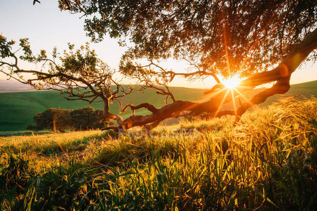 Scenic view of rural landscape at sunset, California, America, USA — Stock Photo