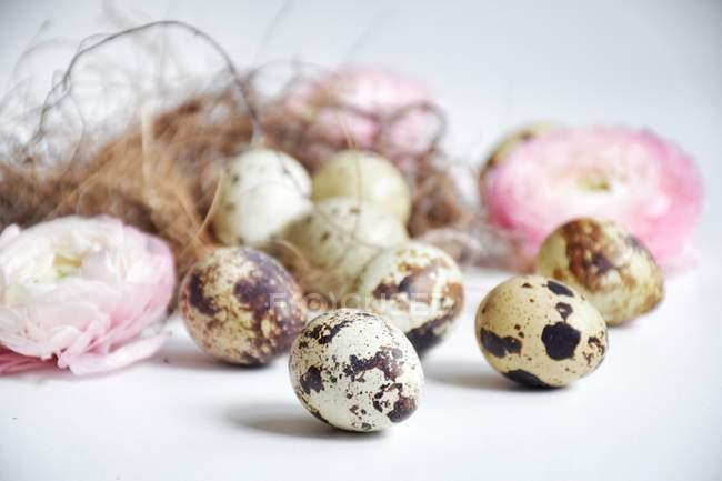 Quail eggs in a bird's nest with ranunculi  flowers — Stock Photo