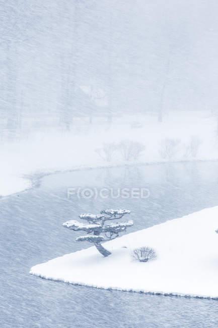 Snow covered Tree in Japanese garden, Chicago Botanic Gardens, Illinois, America, USA — Stock Photo