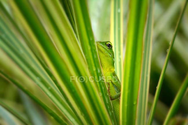 Lizard hiding in a pant, closeup view, selective focus — Stock Photo