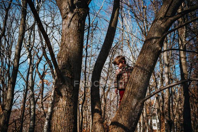 Adorable boy climbing tree on nature — Stock Photo