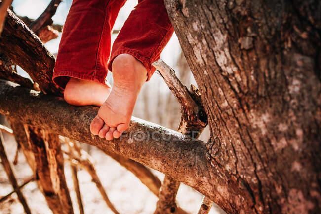 Ragazzo che scala un albero a piedi nudi — Foto stock