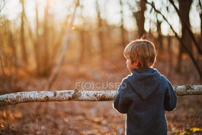 Boy carrying piece of birch wood in forest — Stock Photo
