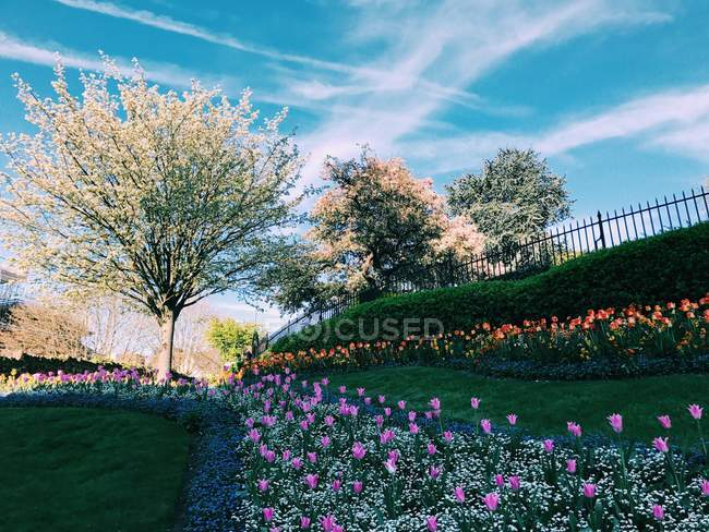 Scenic view of Flowers in springtime, Guildford, Surrey, England, UK — Stock Photo