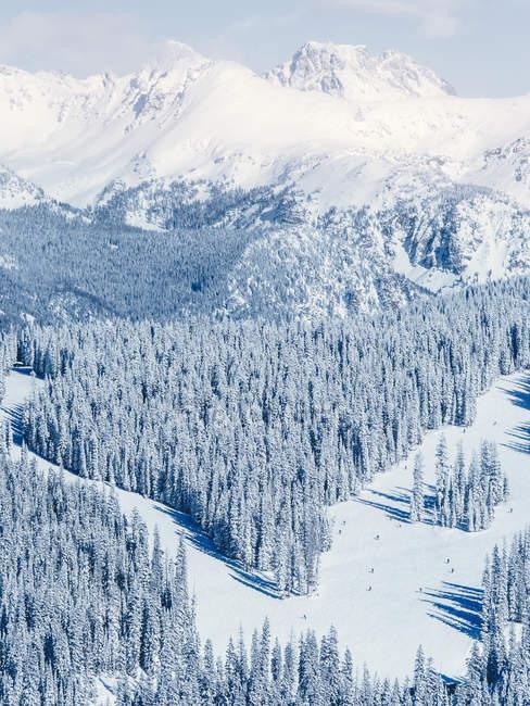 Couvert de neige paysage et conifères, Vail (Colorado), l'Amérique, Usa — Photo de stock