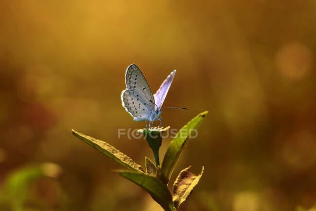 Метелик на квітці (Індонезія). — стокове фото