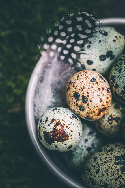 Quail eggs and feathers in a bowl, elevated view — Stock Photo