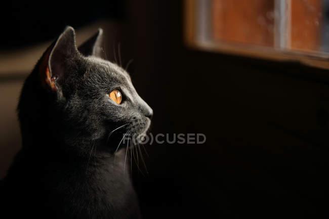 Profil einer Katze, die durch ein Fenster blickt, Seitenansicht — Stockfoto