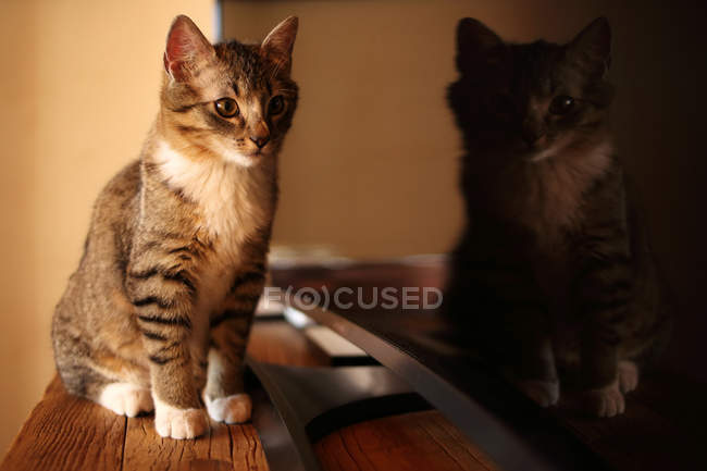 Funny cat looking at reflection in a television — Stock Photo