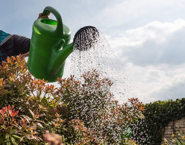 Woman watering shrubs, Germany — Stock Photo