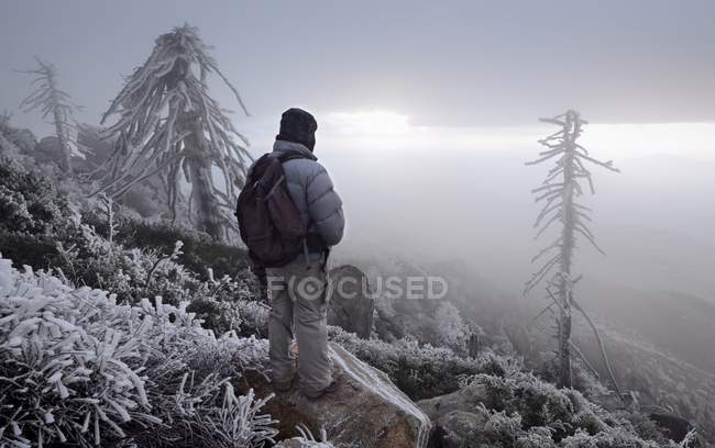 Man looking at view, Cleveland National Forest, California, America, Usa — Photo de stock