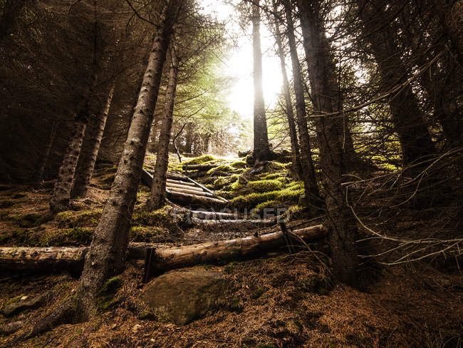 Scenic view of wooden staircase in forest, Iceland — Stock Photo