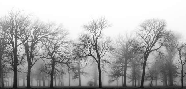 Forêt dans le brouillard, Belle Isle Park, Detroit, Michigan, Amérique, Etats-Unis — Photo de stock