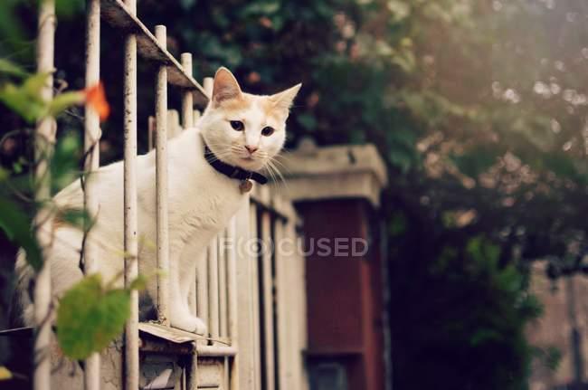 Katze schaut durch einen Metallzaun, Nahaufnahme Ansicht — Stockfoto