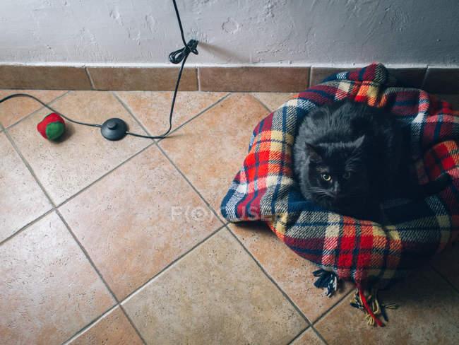 Vue en plan d'un chat allongé dans un panier — Photo de stock