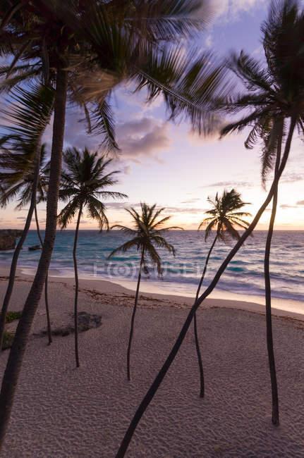 Palme sulla spiaggia ad alba, Barbados — Foto stock