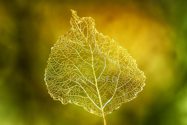 Close-up of an autumn leaf — Stock Photo