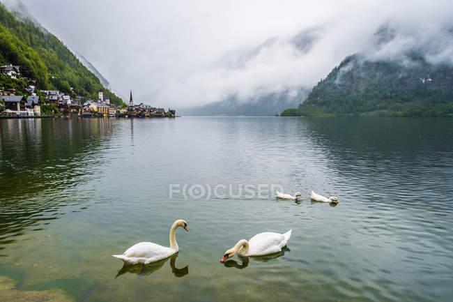Hallstatt villaggio e lago, Gmunden, Austria — Foto stock
