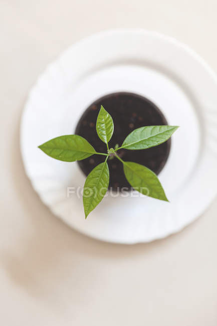 Overhead view of a seedling plant in a plant pot — Stock Photo