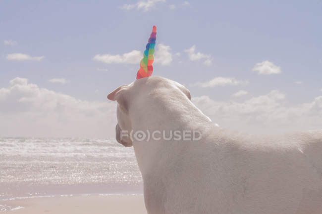 Shar-pei dog standing on the beach wearing a unicorn horn — Stock Photo