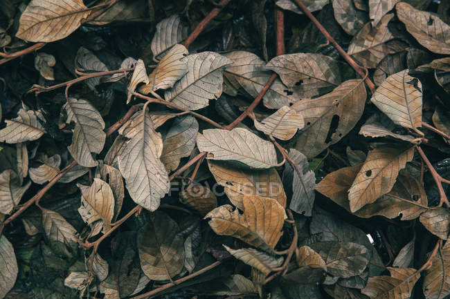 Closeup view of Autumn leaves on the ground, Mexico — Stock Photo