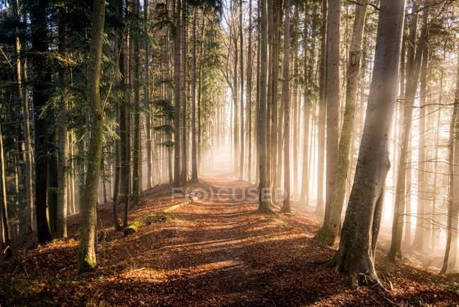 Vista panorámica de bosque de otoño en niebla, Salzburg, Austria - foto de stock