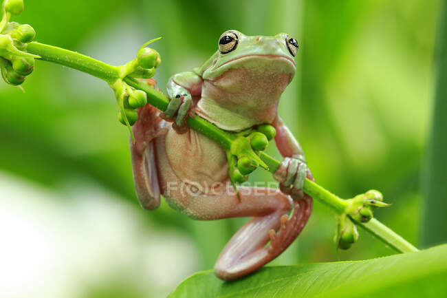 Una rana verde está sentada en un árbol - foto de stock