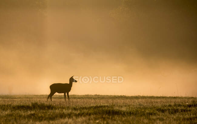 Scenic view of Silhouette of a Deer, Windsor Great Park, Berkshire, England, UK — Stock Photo